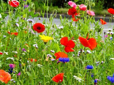 Wildblumen am Straßenrand